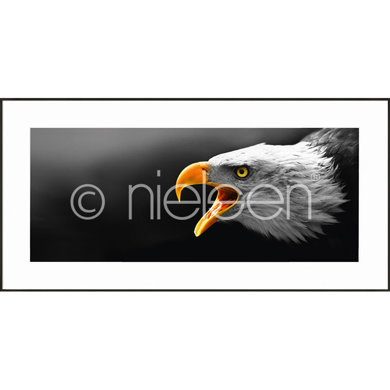 Gerahmte Kunst Eagle mit Aluminium Bilderrahmen C2