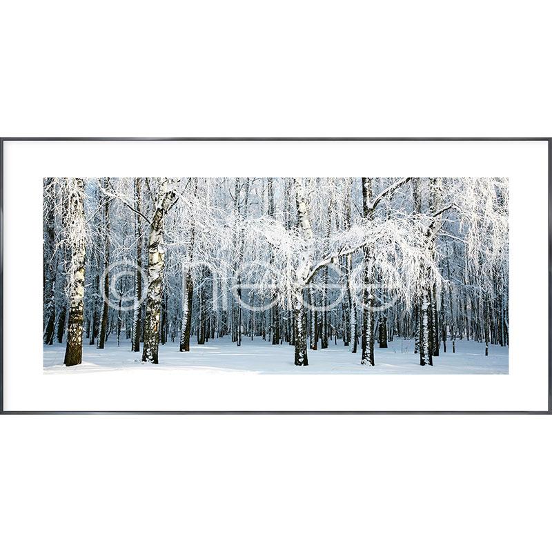 Gerahmte Kunst Birch Forest Snow mit Aluminium Bilderrahmen Alpha