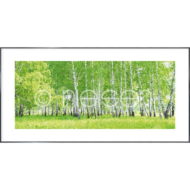 Gerahmte Kunst Birch Forest mit Aluminium Bilderrahmen Alpha