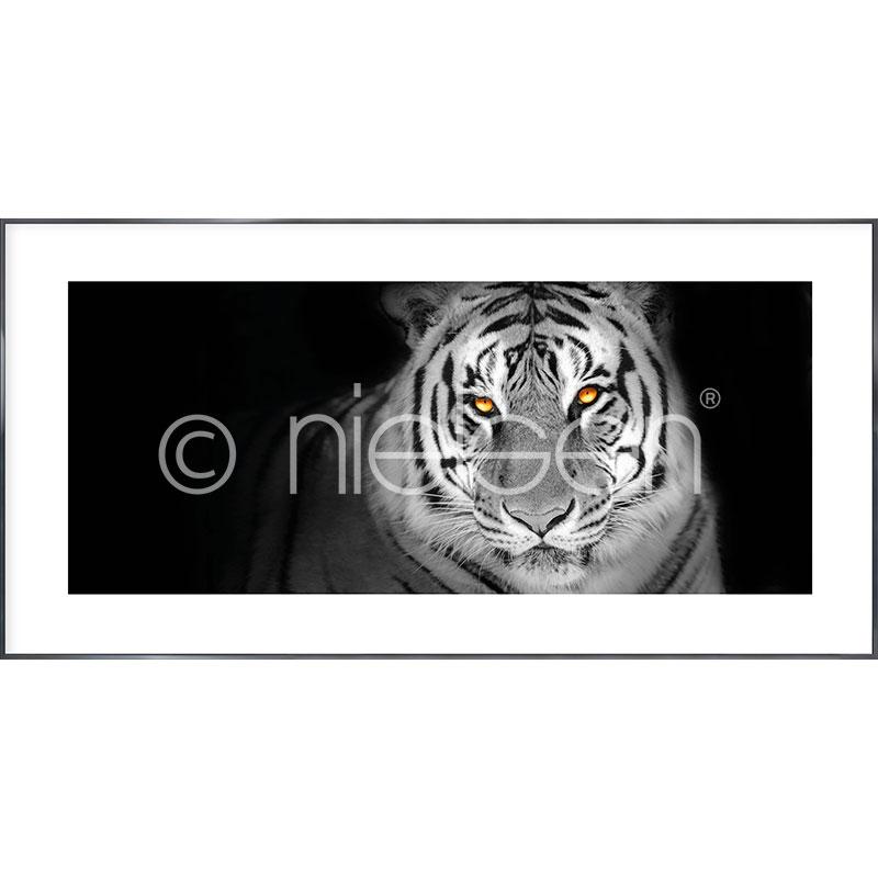 Gerahmte Kunst Tiger mit Aluminium Bilderrahmen Alpha