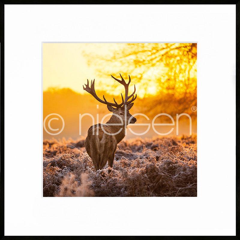 Gerahmte Kunst Cervine Sunset mit Aluminium Bilderrahmen C2