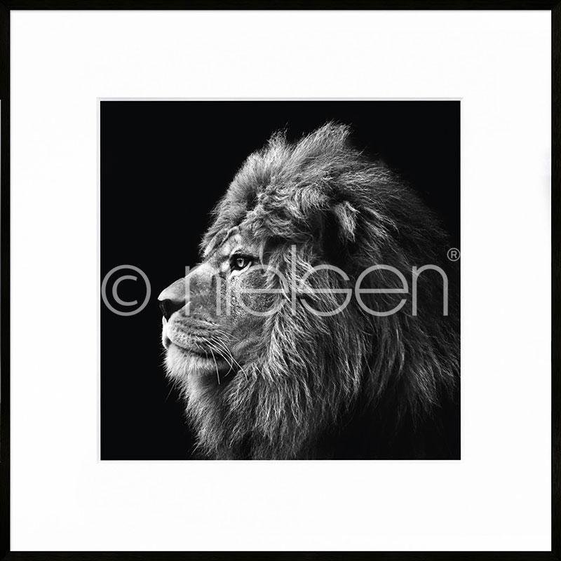 Gerahmte Kunst Lion black and white mit Aluminium Bilderrahmen C2
