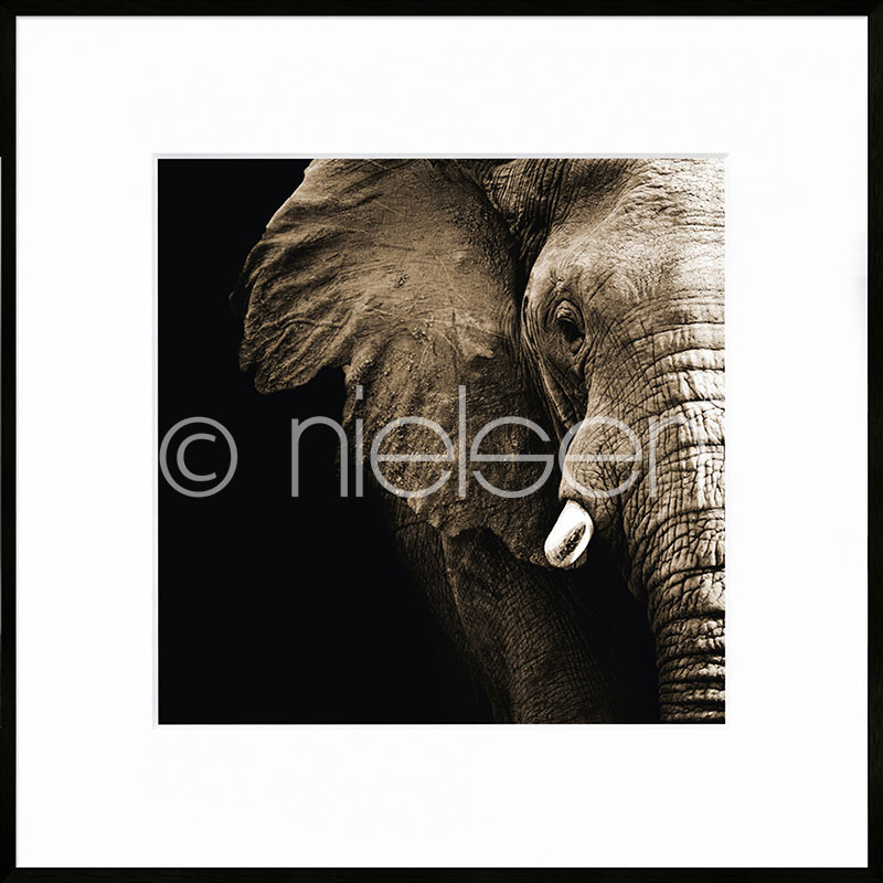 Gerahmte Kunst Elephant mit Aluminium Bilderrahmen C2