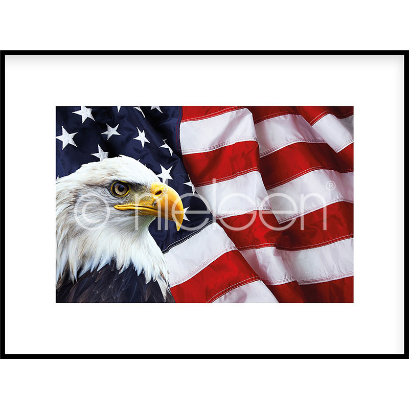 Gerahmte Kunst Eagle USA mit Aluminium Bilderrahmen C2