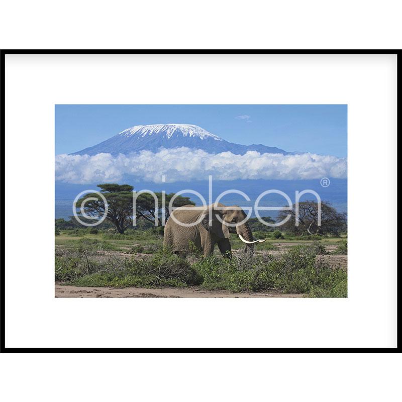 Gerahmte Kunst Elephant Prairie mit Aluminium Bilderrahmen C2