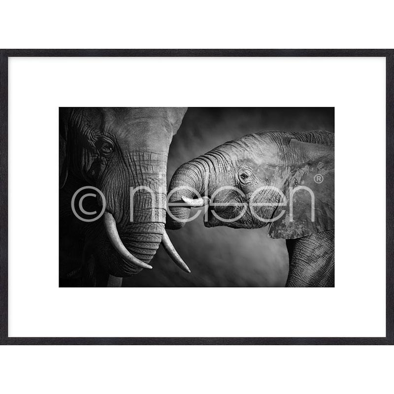 Gerahmte Kunst Elephant Baby mit Holz Bilderrahmen Quadrum