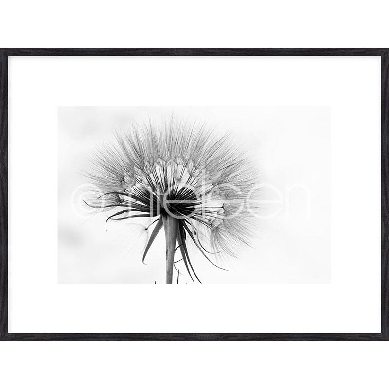 Gerahmte Kunst Dandelion abstract mit Holz Bilderrahmen Quadrum
