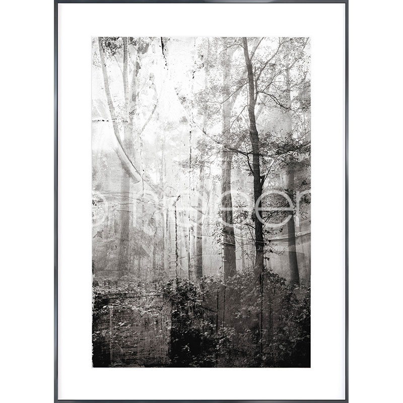 Gerahmte Kunst Forest Black and White mit Aluminium Bilderrahmen Alpha