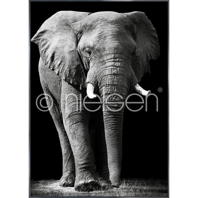 Gerahmte Kunst Elephant black and white mit Aluminium Bilderrahmen Alpha