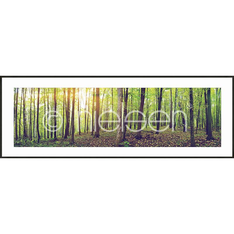 Gerahmte Kunst Forest mit Aluminium Bilderrahmen C2