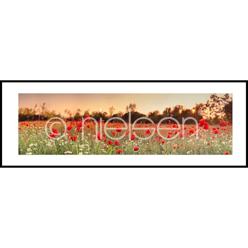 Gerahmte Kunst Poppy Flower Field mit Aluminium Bilderrahmen C2