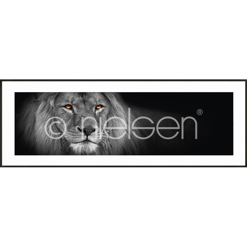 Gerahmte Kunst Lion black and white mit Aluminium Bilderrahmen C2